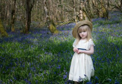 Bluebells by our readers