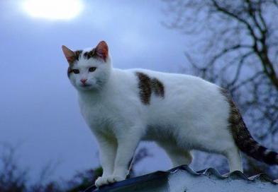 Sligo Cats