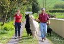 Quarryfield Farm Experience
