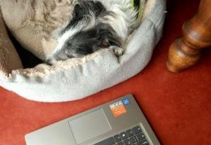 Augie taking a break