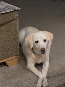 Bailey keeping guard