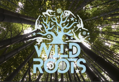 Sligo's Wild Roots Festival